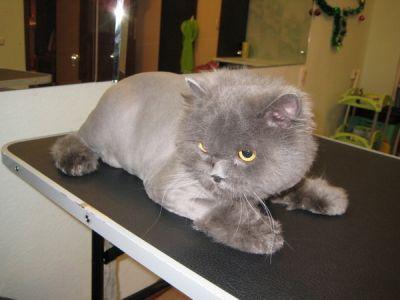 Подстригване на котка