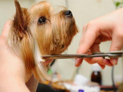 Подстригване куче